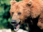 Grizzly-Man-4-8E6J4A3CDR-800x600.jpg